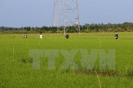Hà Nội cần kiên quyết xử lý tình trạng xây dựng trái phép trên đất nông nghiệp
