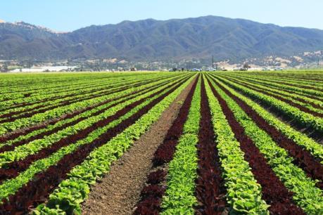 Hợp tác xã nông nghiệp tìm chỗ đứng trong thời kỳ mới