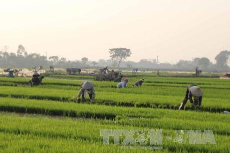 Chuyển đổi cây trồng giúp người dân miền núi Thanh Hóa nâng cao thu nhập