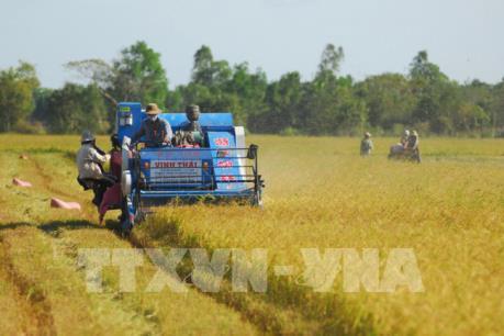Xuất khẩu gạo năm 2017: Vượt kỳ vọng