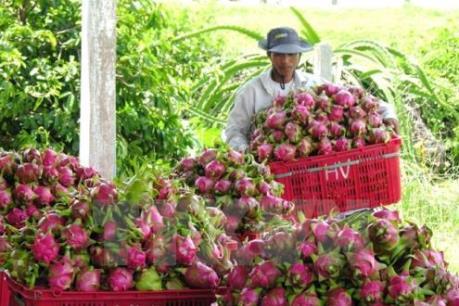 Xuất khẩu nông lâm sản đạt kỷ lục mới trên 36 tỷ USD