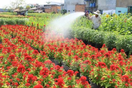 Quảng Trị: Làng hoa An Lạc tất bật chuẩn bị cung ứng cho thị trường Tết
