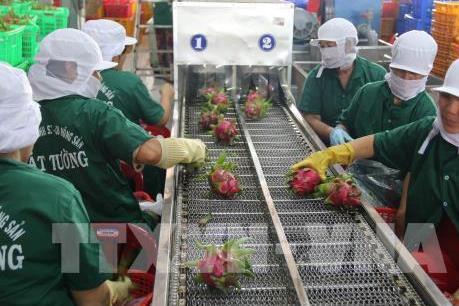 Hàng nông sản Việt Nam xuất sang Hàn Quốc tăng mạnh từ khi FTA có hiệu lực