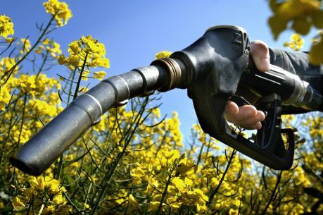 Mỹ áp thuế chống bán phá giá đối với nhiên liệu sinh học của Argentina