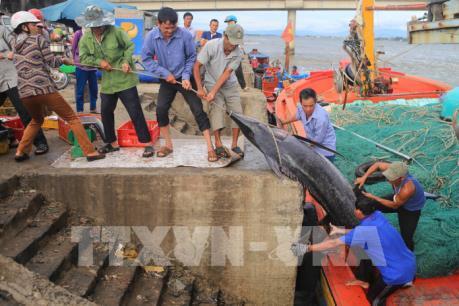 Quảng Trị sẽ chi trả bồi thường sự cố môi trường biển dứt điểm trong tháng 1/2018