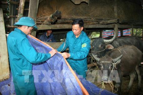 Vĩnh Phúc chủ động phòng chống rét cho cây trồng vật nuôi