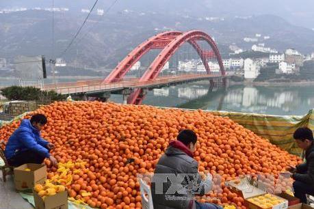 Nông thôn Trung Quốc sôi động với làn sóng khởi nghiệp