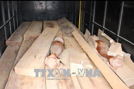 Phát hiện xe chở gỗ không có giấy tờ hợp pháp