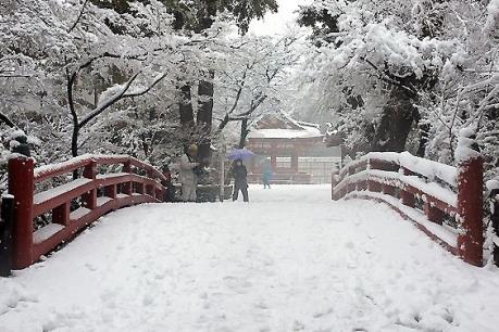 Nhật Bản: Tuyết rơi dày nhất tại Tokyo trong 4 năm qua
