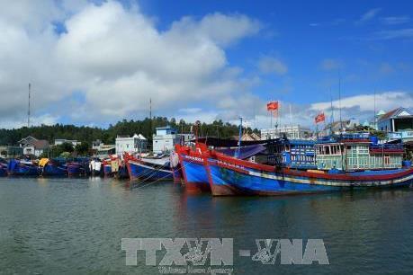 """Ngư dân Phú Yên được """"lộc biển"""" đầu năm"""