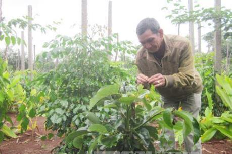 Tiền Giang chuyển đổi đất trồng lúa sang các mô hình đa canh