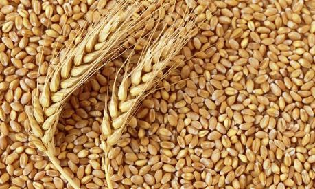 FAO: Giá lương thực toàn cầu tháng 1 ổn định