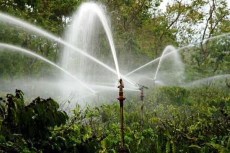 Đắk Lắk tập trung tưới nước đợt 1 cho cà phê xong trước Tết Nguyên đán