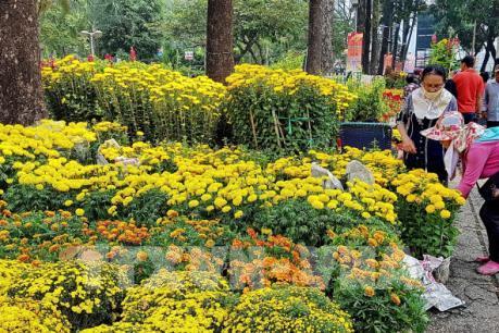 Hoa Tết giá tăng gấp đôi vẫn hút khách