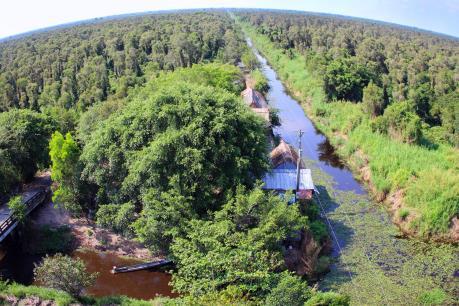 Giá trị thiên nhiên từ tài nguyên rừng