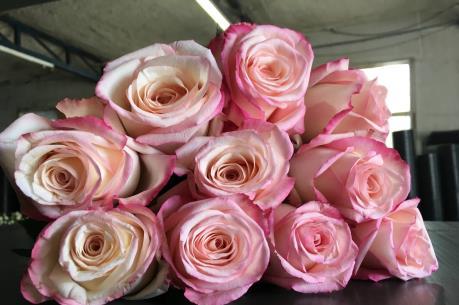 Australia nhập khẩu số hoa hồng cao kỷ lục nhân dịp Valentine