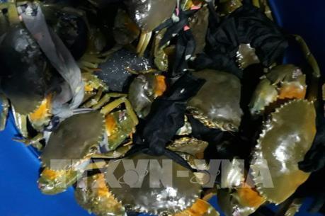 Giá cua biển tăng kỷ lục trong 5 năm qua