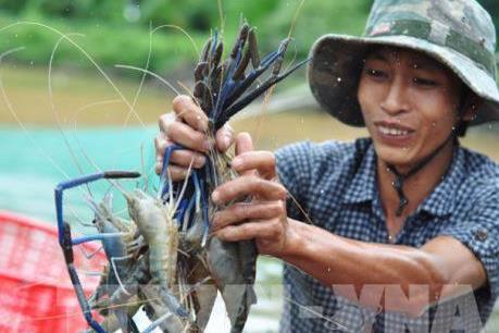 Kế hoạch phát triển ngành tôm Việt Nam đến năm 2025