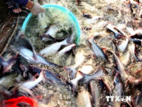 Trung Quốc tạm cấm đánh bắt cá ở các sông