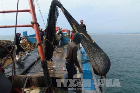 Bình Thuận không cho phép đóng mới tàu cá làm nghề giã cào từ ngày 20/3