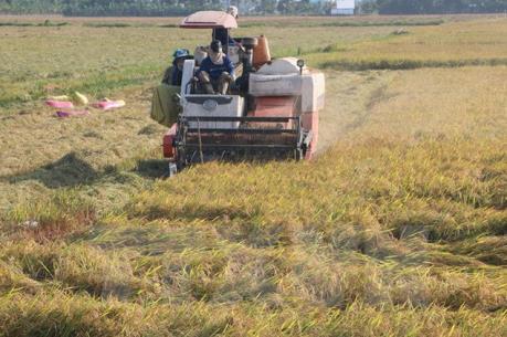 Rà soát điều chỉnh quy hoạch phát triển nông nghiệp Đồng bằng sông Cửu Long