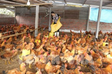 CPTPP: Cơ hội và thách thức đối với ngành chăn nuôi