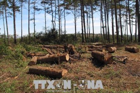 Vụ phá rừng cộng đồng tại Đắk Nông: Tạm giam Chủ tịch UBND xã Đắk R'Tih
