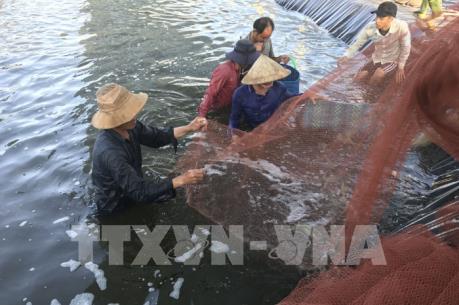 Tháo gỡ áp lực với ngành nuôi tôm