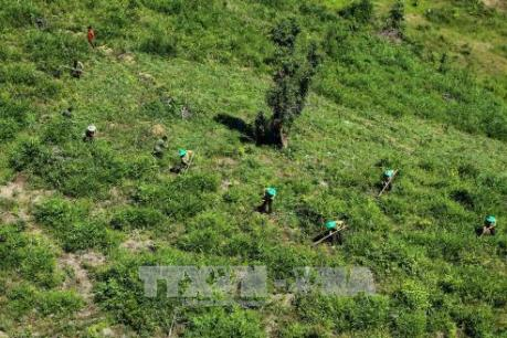 Thừa Thiên - Huế phát triển tài nguyên rừng