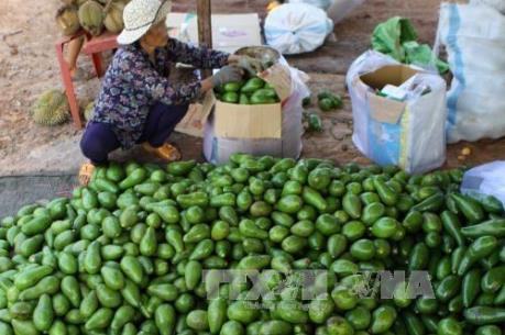 Quảng bá sản phẩm trái bơ Đắk Nông