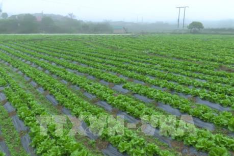 Thách thức về nông nghiệp sạch - Bài 1: Khó về đầu ra