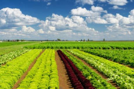 CSC Việt Nam đăng ký mua 500.000 cổ phiếu PAN