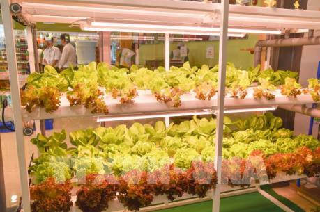Bình Thuận đưa vào hoạt động chuỗi cung ứng nông sản, thực phẩm sạch đầu tiên