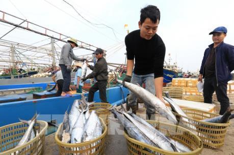 Kiên Giang: Chấm dứt khai thác đánh bắt hải sản trái phép trong thời gian sớm nhất
