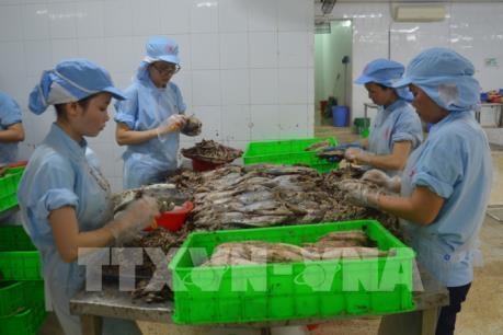 Khắc phục thẻ vàng về IUU: Cần sự nỗ lực hơn nữa trong việc xây dựng nghề cá bền vững