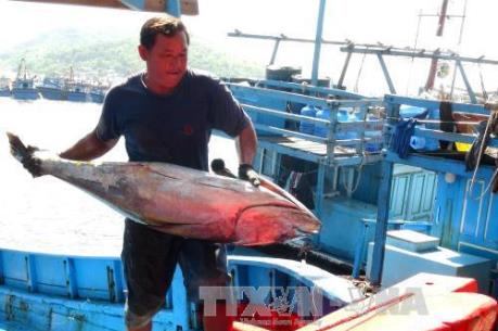 """Khắc phục """"thẻ vàng"""" IUU: Kiên Giang thi đua khai thác hải sản đúng quy định"""