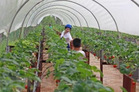 Điều kiện cấp Giấy chứng nhận doanh nghiệp nông nghiệp ứng dụng công nghệ cao