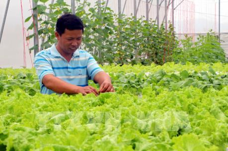 Có thể làm giàu từ nông nghiệp an toàn
