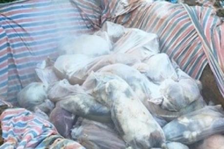 Phát hiện doanh nghiệp chôn gần 400 con lợn chết không đúng quy định
