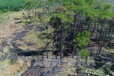 Bắt quả tang 11 đối tượng phá rừng phòng hộ tại thành phố Đà Lạt, Lâm Đồng