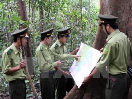 Phát hiện vụ phá gần 20ha rừng tại tỉnh Đắk Lắk
