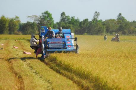 Hợp đồng xuất khẩu gạo lớn của Việt Nam chủ yếu ở phẩm cấp trung bình