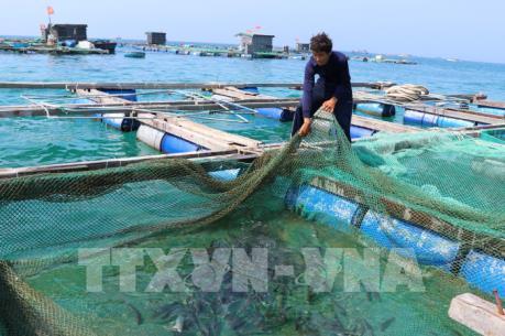 Phát triển ngành thủy sản Khánh Hòa - Bài 1: Đa dạng nguồn giống