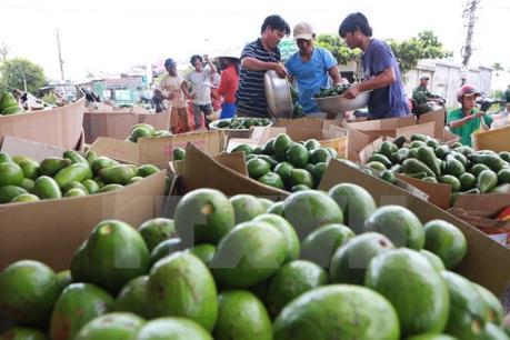 """Đẩy mạnh tiêu thụ nông sản: Cầu nối vươn tới """"chợ"""" toàn cầu"""