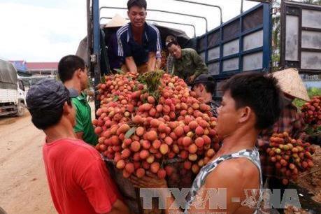 Mỗi ngày có khoảng 1.200 tấn vải thiều Bắc Giang được tiêu thụ