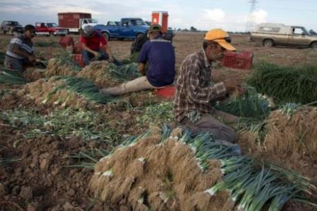 """Ngành nông nghiệp Mỹ """"lao đao"""" vì vấn đề tranh chấp thương mại"""