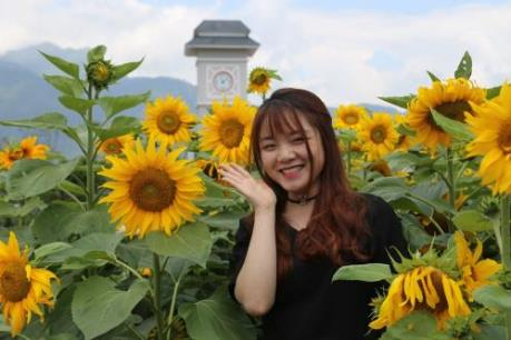 """Tò mò với cuộc thi """"Ai đẹp hơn hoa"""" tại Tuần lễ hoa hướng dương Fansipan 2018"""