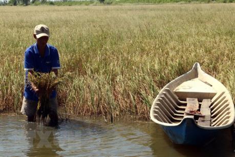 Tiền Giang đảm bảo nguồn nước tưới tiêu cho vùng nhiễm mặn