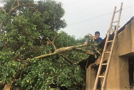 Cơ bản hoàn tất việc khắc phục hậu quả mưa kèm gió lốc tại Phú Lương, Thái Nguyên