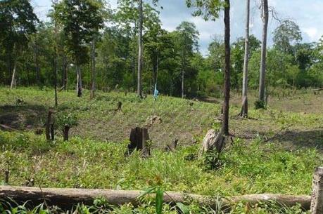 Đề xuất cấp giấy phép xây dựng với công trình phục vụ sản xuất nông nghiệp